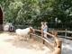 Москва планирует вложить 25 млн. руб. в ремонт зоопарка в 2010 году