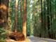Меры по восстановлению лесопосадок при строительстве олимпийских объектов в Сочи малоэффективные